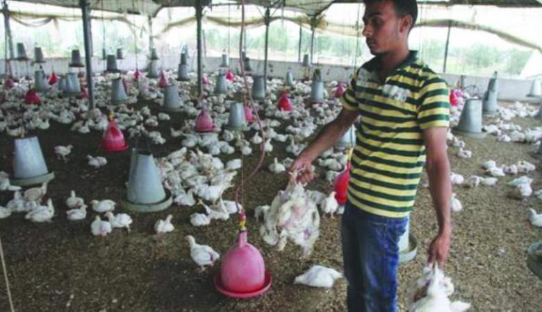 600 ألف دولار خسائر قطاع الزراعة بغزة