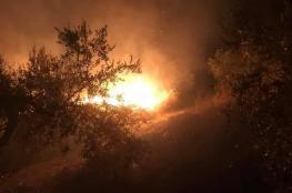 مستوطنون يضرمون النار بأشجار زيتون في سبسطية شمال غرب نابلس
