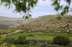 أجواء ربيعية من بلدة نعلين .