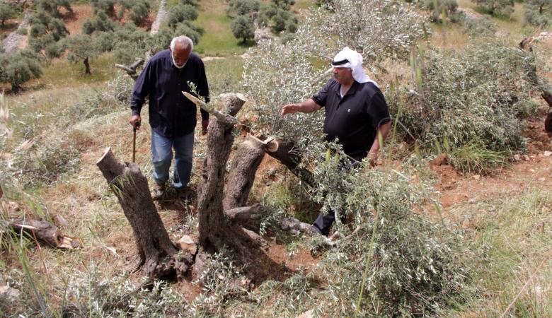 الاحتلال يهدم غرفة زراعية ويدمر أشجارا في قصرة جنوب نابلس