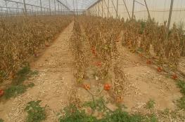 """اسرائيل توجه لائحة اتهام لفلسطيني بحجة تدمير محصول """"البندورة """""""