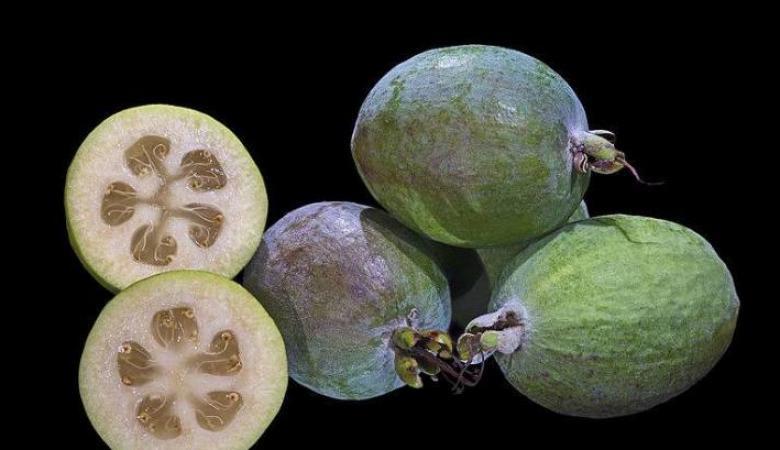 """""""الفييجوا"""": فاكهة جديدة في غزة"""