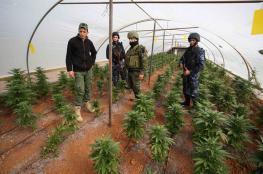 الشرطة تضبط مشتلاً ومعملاً لتغليف المخدرات في طولكرم