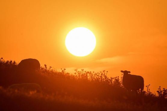 حالة الطقس : اجواء شديدة الحرارة تستمر لأيام