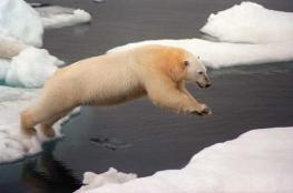 الامارات ستجلب كتل جليدية ضخمة من القطب الجنوبي