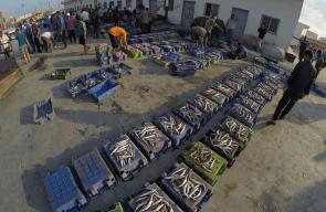 صيادون يعرضون أسماك للبيع في ميناء غزة بعد رحلة صيد الليلة الماضية