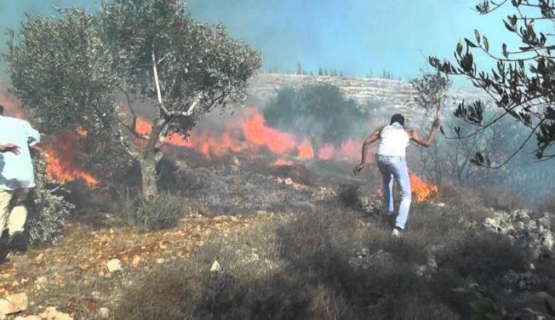 النيران تلتهم مئات أشجار الزيتون في رمانة غرب جنين