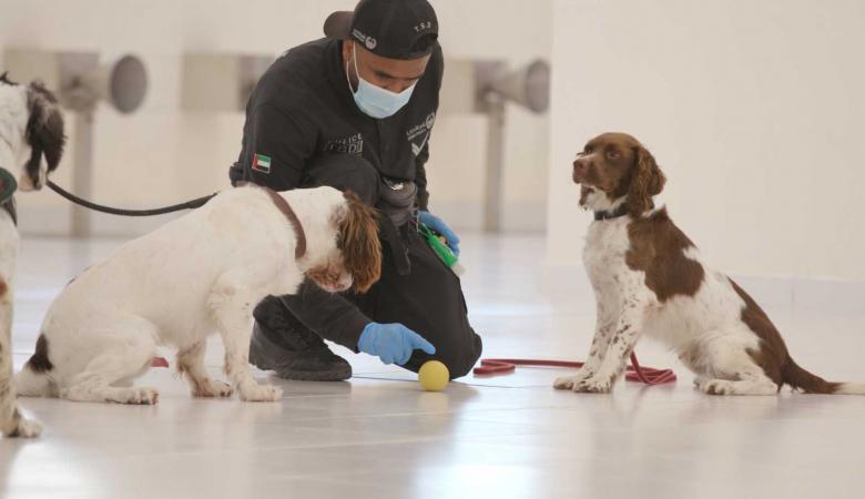 الامارات تنجح في استخدام الكلاب البوليسية في مكافحة كورونا