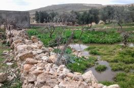 المياه العادمة القادمة من المستوطنات تتلف عنب الخضر جنوب بيت لحم