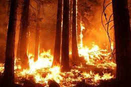 النيران تواصل التهام غابات اللاذقية في سوريا