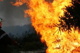 احتراق 500 شجرة في جنين