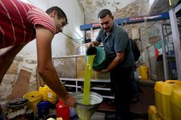 توقعات بانتاج 19 ألف طن من زيت الزيتون هذا العام في فلسطين