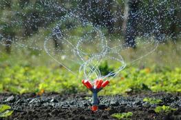 سابقة ...السجن عامين لمزارع من جنين بتهمة ري مزروعاته بالمياه العادمة
