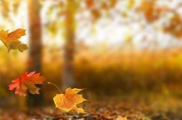 شهر الخريف يبدا في فلسطين الاثنين المقبل