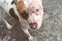كلب متوحش يصيب طفلا فلسطينيا بجراح حرجه عصر اليوم