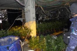 الشرطة تضبط مستنبت  الماريجوانا داخل منزل في الخليل