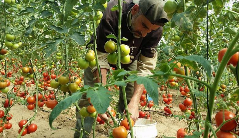 306 آلاف دولار لصالح المزارعين المتضريين من اعتداءات الاحتلال بغزة