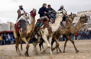 عرض للخيول و الجمال خلال حفل تراثي على شاطئ بحر غزة