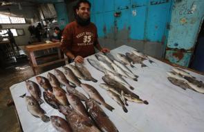 إدخال سمك مصري لغزة عبر معبررفح