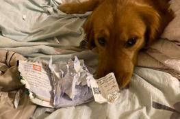 منعها من السفر للصين.. كلب يمزق جواز سفر صاحبته لإنقاذ حياتها
