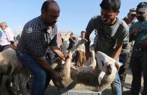 مواطنون يشترون اضحية العيد من سوق الحلال في مدينة نابلس