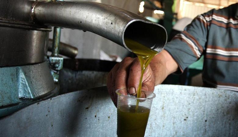 الفلسطينيون يدخلون الى الاردن الف طن من الزيت سنوياً
