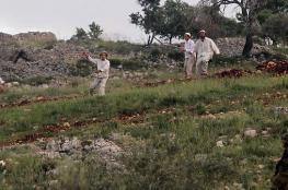 مستوطنون يقطعون 300 شجرة زيتون جنوب بيت لحم