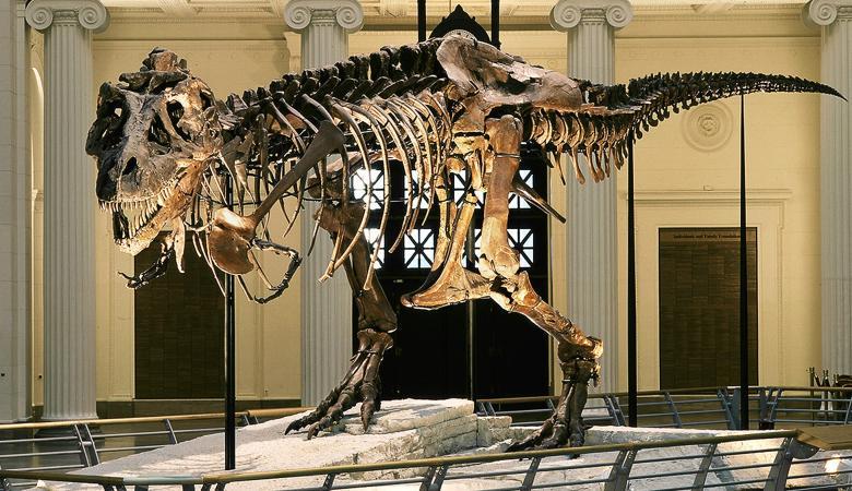 علماء يكتشفون بقايا أقدم ديناصور عملاق على وجه الأرض
