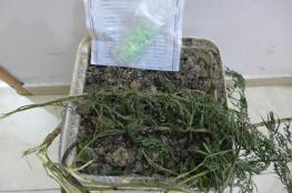 ضبط قرابة 400 بذرة ماريجوانا و51 حبة إكستازي في طولكرم
