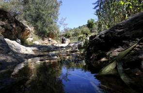 محمية وادي عين الزرقاء