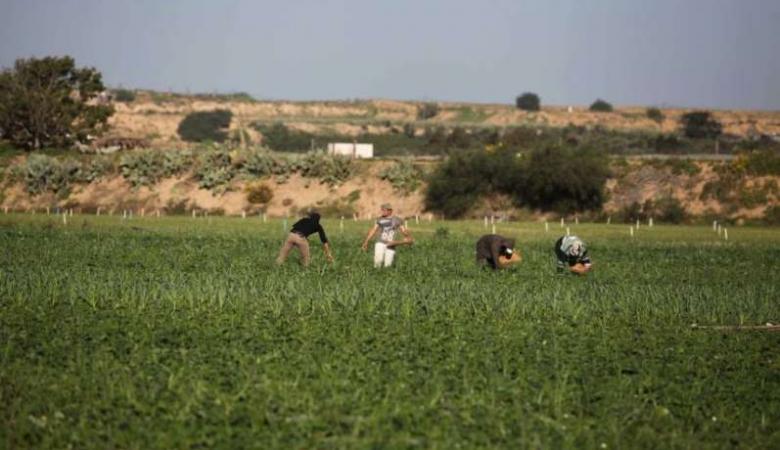 الاحتلال يفتح نيرانه تجاه الرعاة والمزارعين بغزة دون إصابات