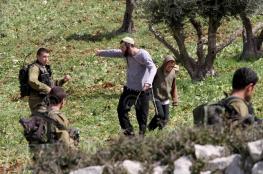 مستوطنون لصوص يسرقون 420 شجرة زيتون من قرى جنوب نابلس