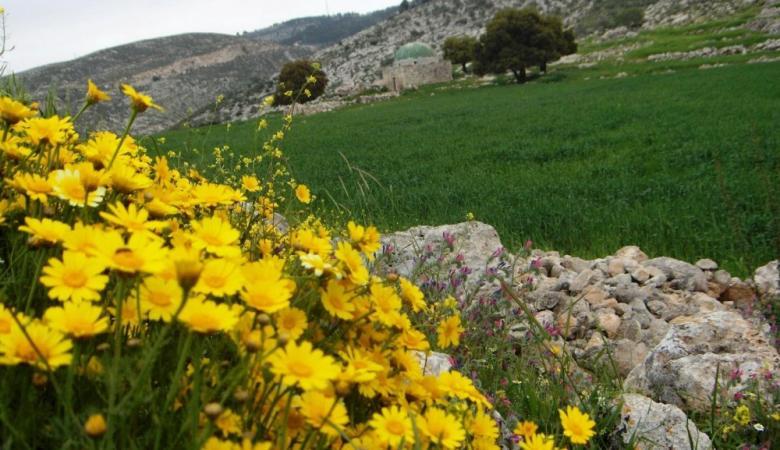 حالة الطقس: جو ربيعي والحرارة حول معدلها السنوي العام