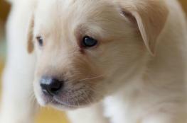 كلب يخبر صديقته إصابتها بالسرطان