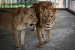 الحصار يهدد حدائق الحيوانات في غزة