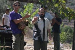 المستوطنون يسرقون 400 شجرة زيتون جنوب بيت لحم