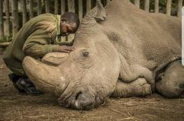موت آخر وحيد قرن أبيض ليصبح العالم خالياً إلى الأبد منه