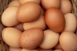 6 أنواع من البيض أسوأ من السم