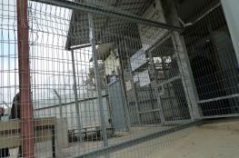 قرار بالإفراج عن الطفلة شهد ابو كويك من مخيم قلنديا