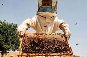 شقيقان يحترفان تربية النحل في مدينة دورا جنوب الخليل.