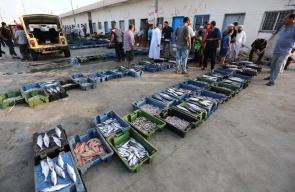 صيادون فلسطينيون يقومون بجمع الأسماك لبيعها في ميناء غزة، بعد السماح لهم بالصيد لمساحة 9 ميل