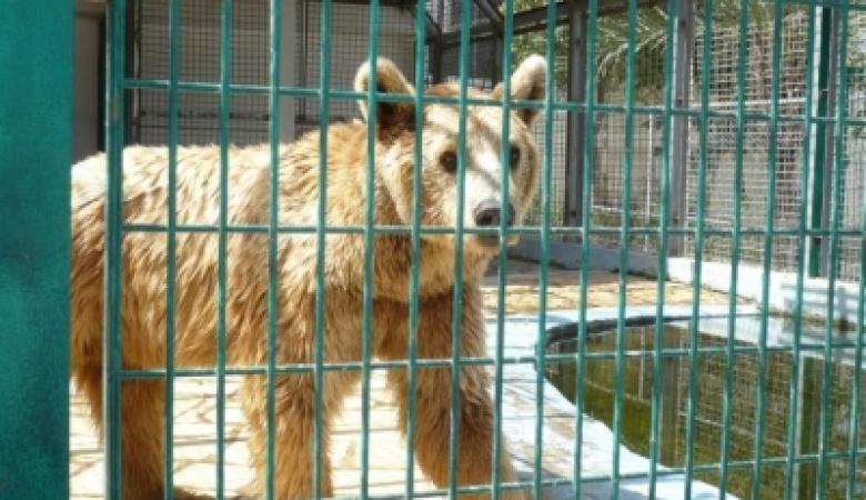 الحكم المحلي تقرر اغلاق حديقة الحيوانات في قلقيلية