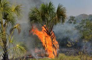 الحرائق لا تزال مستعرة في غابات الأمازون بالرغم من تدخل الجيش البرازيلي