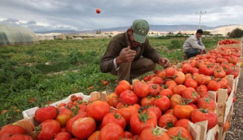 الاقتصاد: اجراءات حكومية لدعم المزارعين