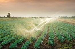 جنين : القبض على مزارعين يقومون بري الخضروات بمياه المجاري