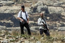 قطعان المستوطنين يسرقون ثمار الزيتون جنوب شرق نابلس