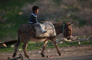 من الريف الفلسطيني