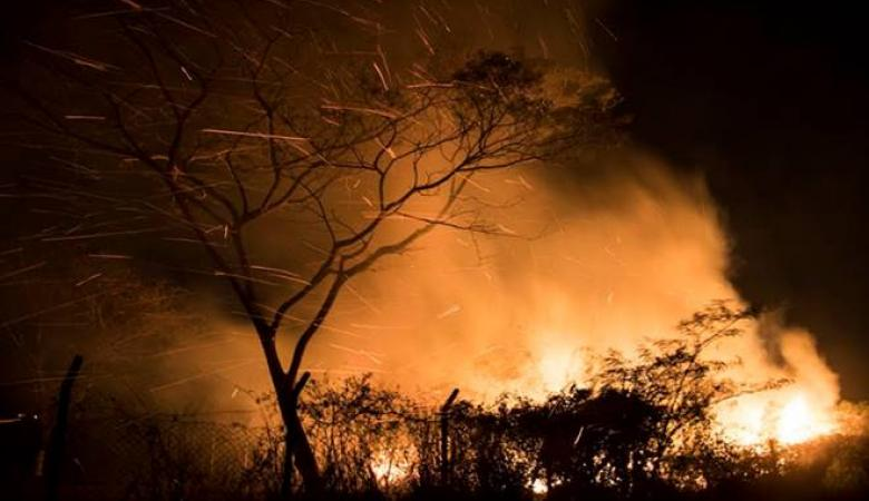جنين  : حرائق تلتهم 1200 شجرة زيتون