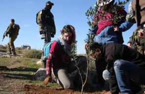 زراعة أشجار الزيتون في اراضي مهددة بالمصادرة في يطا جنوب الخليل