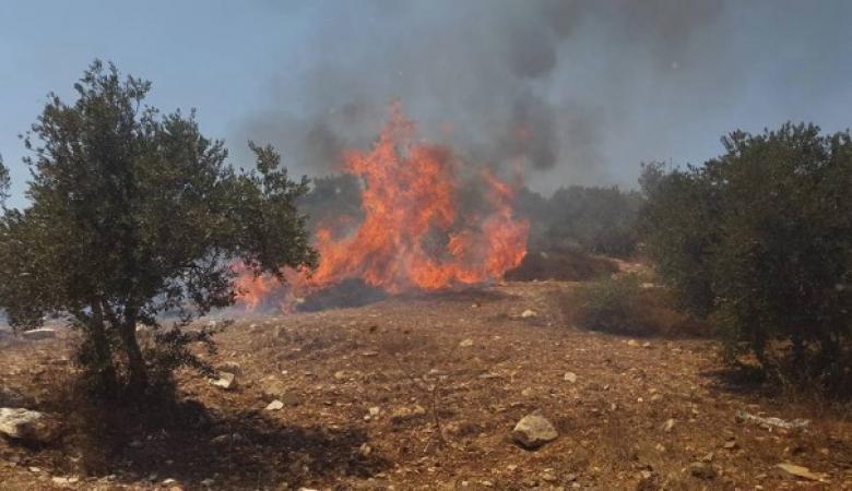 حريق يلتهم 100 شجرة زيتون جنوب جنين